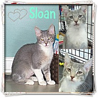 Adopt A Pet :: Sloan - Jeffersonville, IN