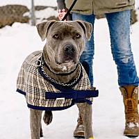 Adopt A Pet :: Knight - High River, AB