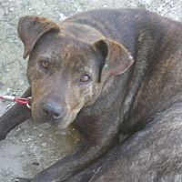Adopt A Pet :: Alicia - Jacksonville, TX