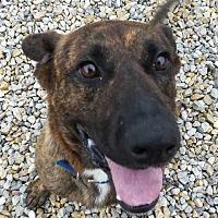 Adopt A Pet :: Zeke - Sidney, NE