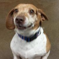 Adopt A Pet :: Peets - Oxford, WI