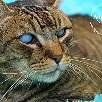 Adopt A Pet :: Nana - Ft. Lauderdale, FL