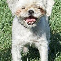 Adopt A Pet :: Charlotte - Palo Alto, CA