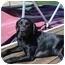 Photo 1 - Labrador Retriever Mix Dog for adoption in Cumming, Georgia - Lily