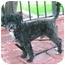 Photo 2 - Maltese/Poodle (Miniature) Mix Dog for adoption in Poway, California - Kokis