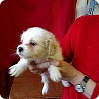 Adopt A Pet :: Tag - Seattle, WA