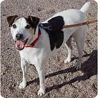 Adopt A Pet :: Filo  - Scottsdale, AZ