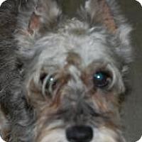 Adopt A Pet :: Sarah Jean - North Benton, OH
