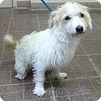 Adopt A Pet :: Buster - St. Petersburg, FL