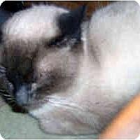 Adopt A Pet :: Douglas - Jacksonville, FL