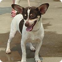 Adopt A Pet :: Skippy - Greenville, RI