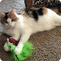 Adopt A Pet :: Mimi - Edmond, OK