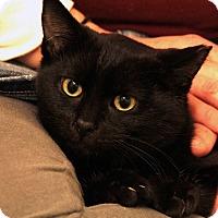 Adopt A Pet :: Glinka - St. Louis, MO