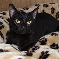 Adopt A Pet :: Samantha - Jackson, MS