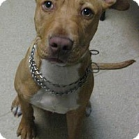 Adopt A Pet :: Ryan - Gary, IN