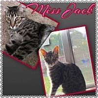 Adopt A Pet :: Miss Jack & Miss Mustard - Napa, CA