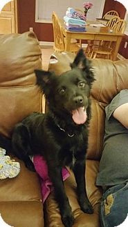 Border Collie Mix Dog for adoption in North Haven, Connecticut - Pepper