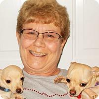 Adopt A Pet :: Sonny (Tiny Tim) - Plain City, OH