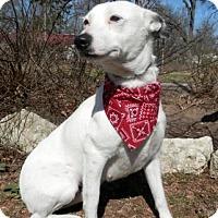 Adopt A Pet :: Chyann - Tyler, TX