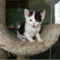 Adopt A Pet :: Hiccup - Saskatoon, SK
