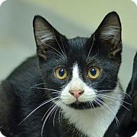 Adopt A Pet :: 10311534 - Brooksville, FL