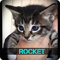 Adopt A Pet :: Rocket - Hartford City, IN