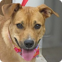 Adopt A Pet :: Biscuit-PENDING ADOPTION - Rockville, MD