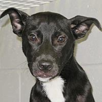 Adopt A Pet :: Bang - Carrollton, GA