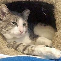 Adopt A Pet :: Tommy Boy: Totally Terrific Mush - Brooklyn, NY