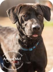 Labrador Retriever Mix Dog for adoption in Crawfordville, Florida - Suzie