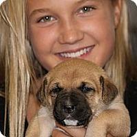 Adopt A Pet :: AJ - Burr Ridge, IL