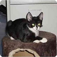 Adopt A Pet :: Winnie - Boca Raton, FL