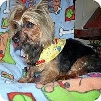 Adopt A Pet :: Walter - Fremont, CA