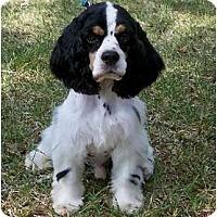Adopt A Pet :: Manny - Sugarland, TX