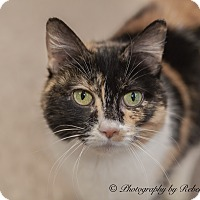 Adopt A Pet :: Belle - Byron Center, MI