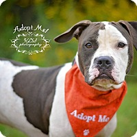 Adopt A Pet :: Darby - Fort Valley, GA