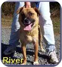 Shepherd (Unknown Type) Mix Dog for adoption in Aldie, Virginia - River