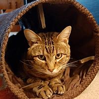 Adopt A Pet :: Caesar - Nottingham, MD