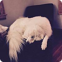 Adopt A Pet :: Watson - Minneapolis, MN