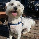 Adopt A Pet :: Skippy