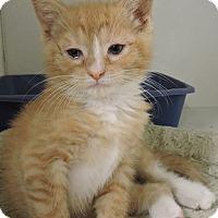 Adopt A Pet :: Penny - Massapequa, NY