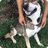 Adopt A Pet :: Jaxx pending adoption - East Hartford, CT