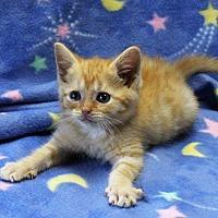 Adopt A Pet :: Felix - Greensboro, NC