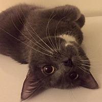 Adopt A Pet :: MONA - Palatine/Kildeer/Buffalo Grove, IL