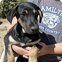 Adopt A Pet :: BILLY - Corona, CA