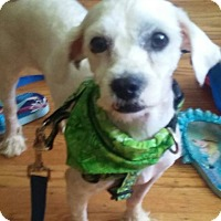 Adopt A Pet :: Bella - West Deptford, NJ