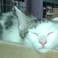 Adopt A Pet :: Ralphie - Whittier, CA