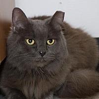 Adopt A Pet :: Gracie (gray) - Philadelphia, PA