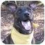 Photo 1 - German Shepherd Dog Mix Puppy for adoption in San Diego, California - Bugsy