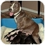 Photo 2 - American Pit Bull Terrier Mix Dog for adoption in Orlando, Florida - Meeka